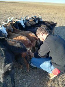 La traite des chèvres avec la famille de nomades